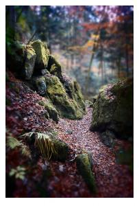 Bayerischer_Wald_01