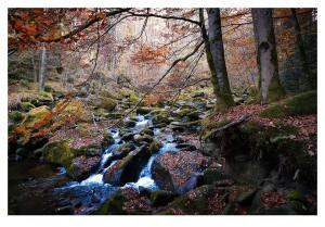 Bayerischer_Wald_02