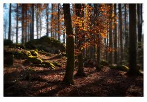 Bayerischer_Wald_03
